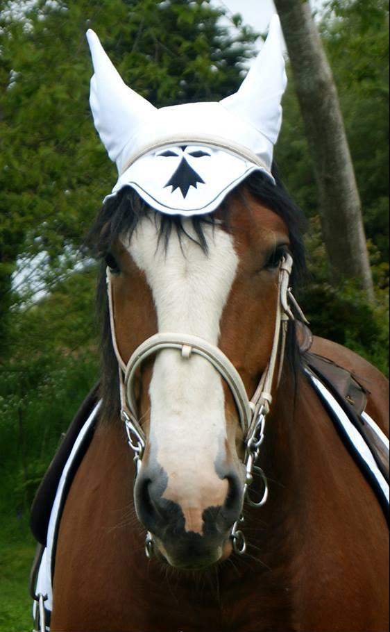Cheval En Bretagne Wikipedia
