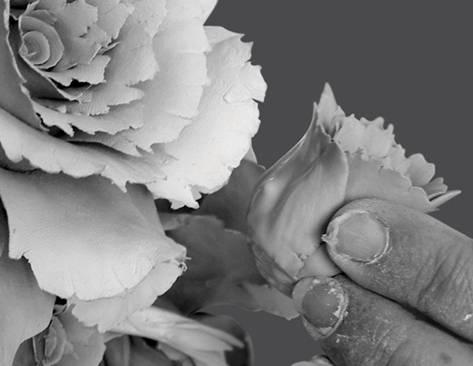 Lavorazione di una composizione floreale - Sabrina Majello - Opera propria - via Wikipedia