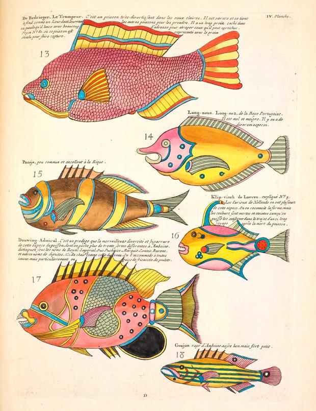 File:Louis Renard colorful fish.jpg - Wikimedia Commons
