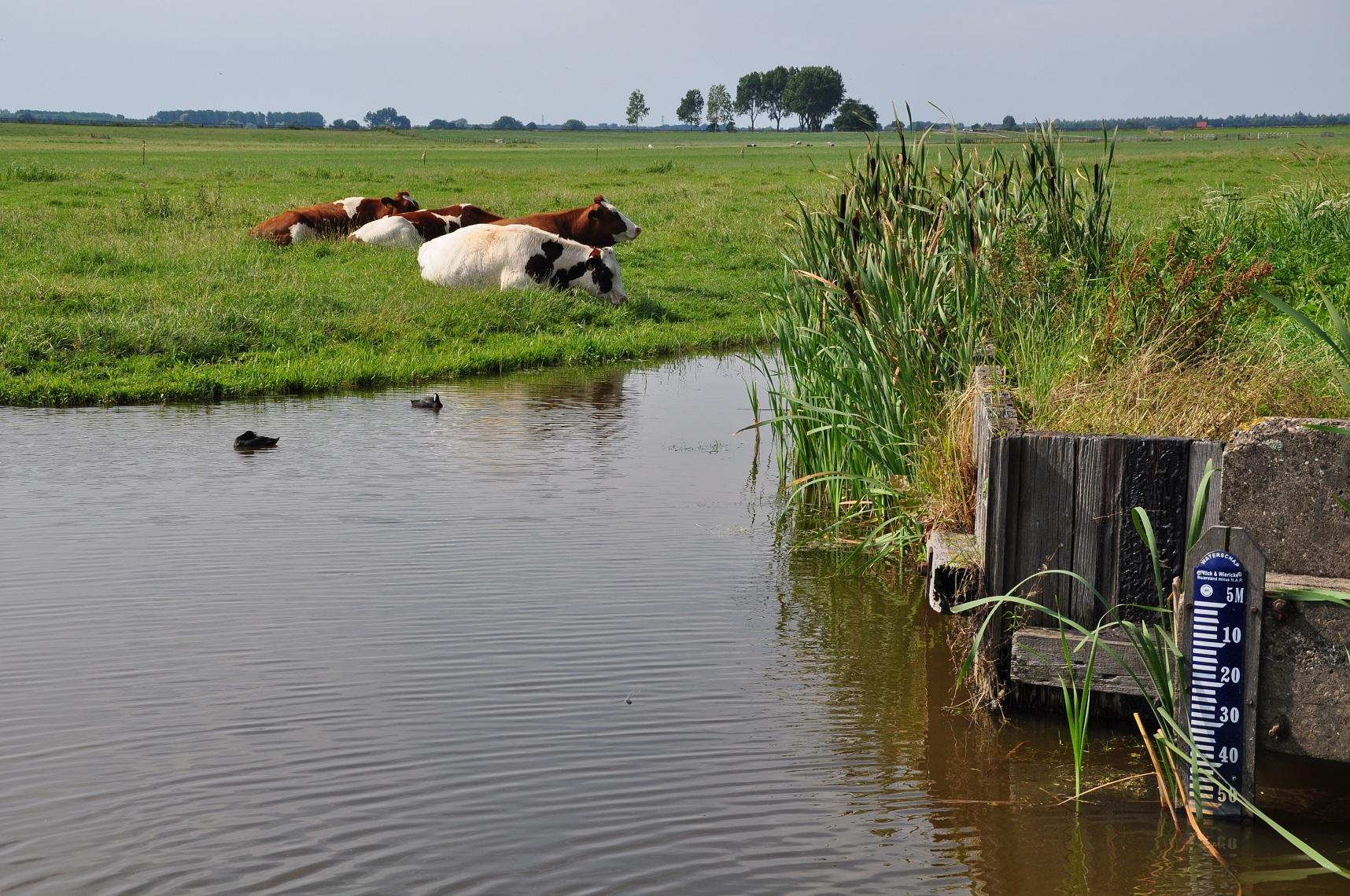 Zoetermeer Netherlands  City new picture : Description Netherlands, Zoetermeer, Zoetermeerse Meerpolder 1