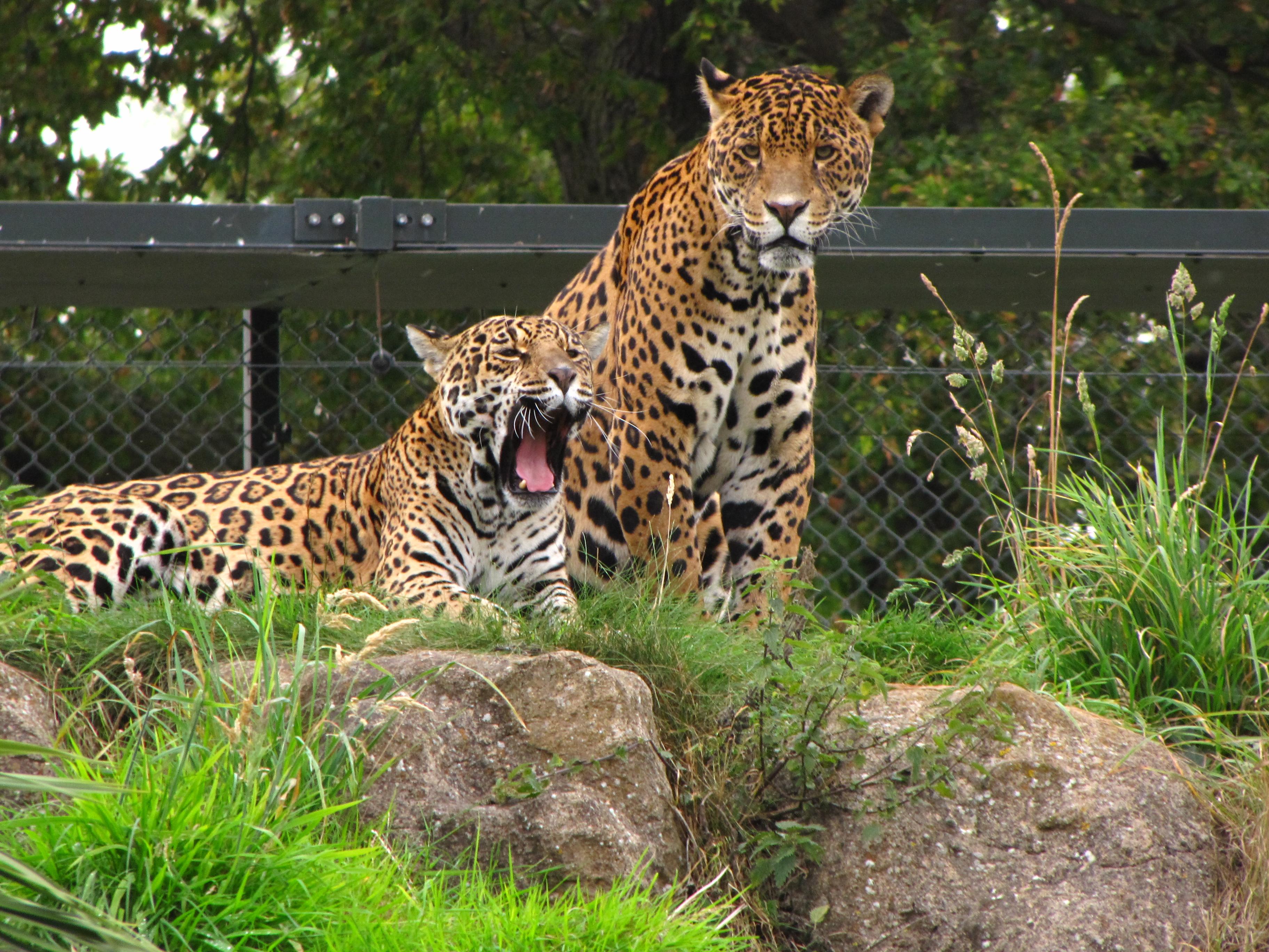 حديقة الحيوانات تشيستر Chester Zoo