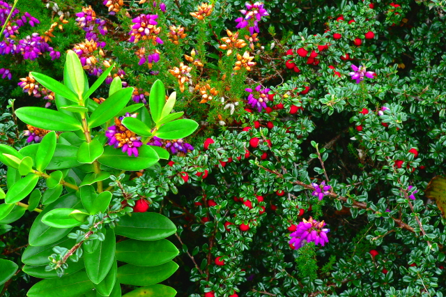 English: Poison Glen - Mother Nature - the flo...