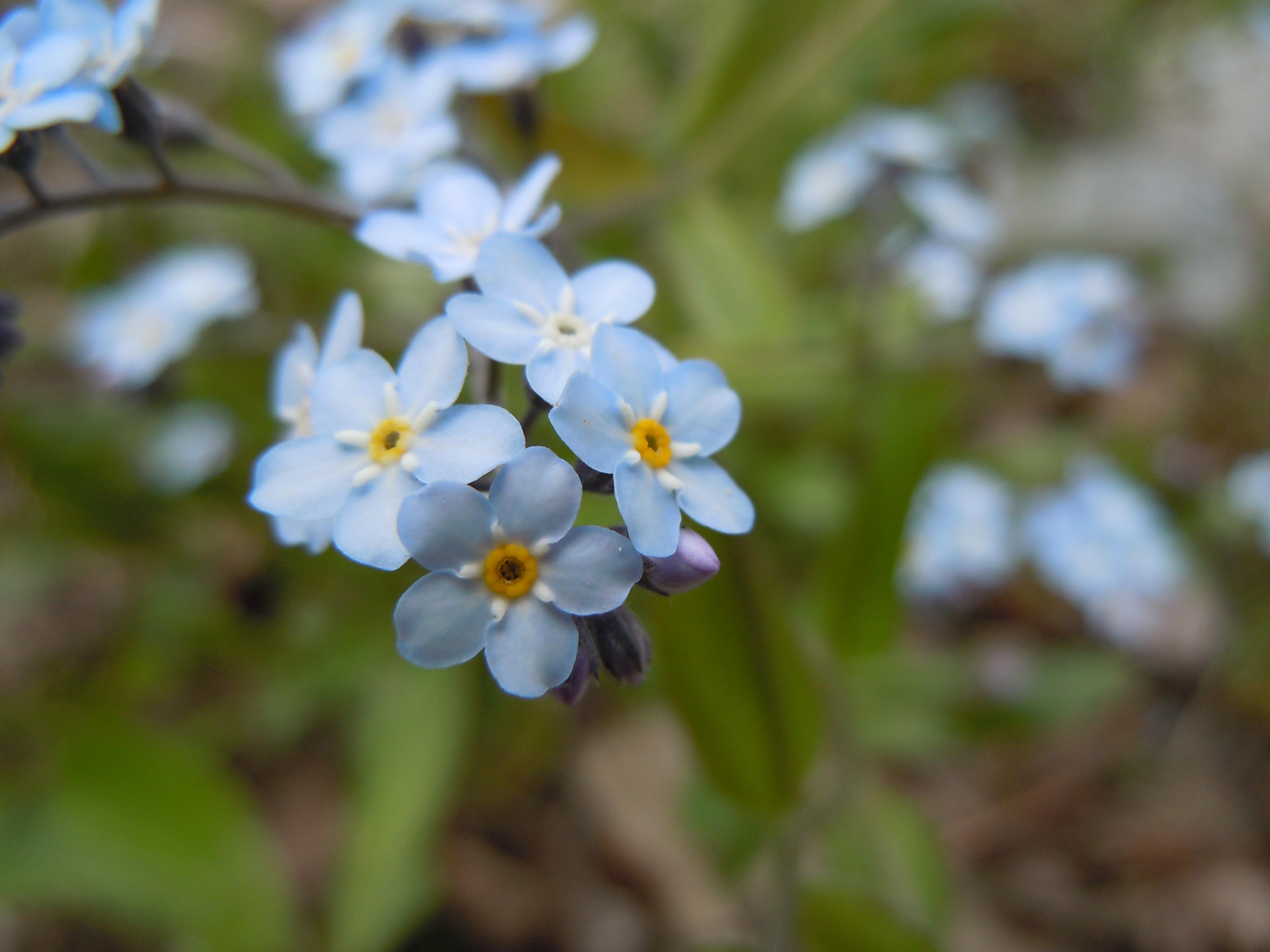 small flower  flower, Beautiful flower