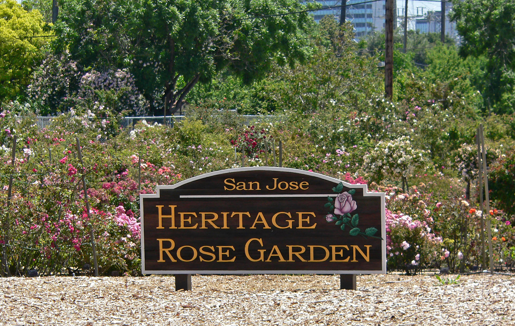 http://upload.wikimedia.org/wikipedia/commons/e/ea/San_Jose_Heritage_Rose_Garden_view_1.jpg