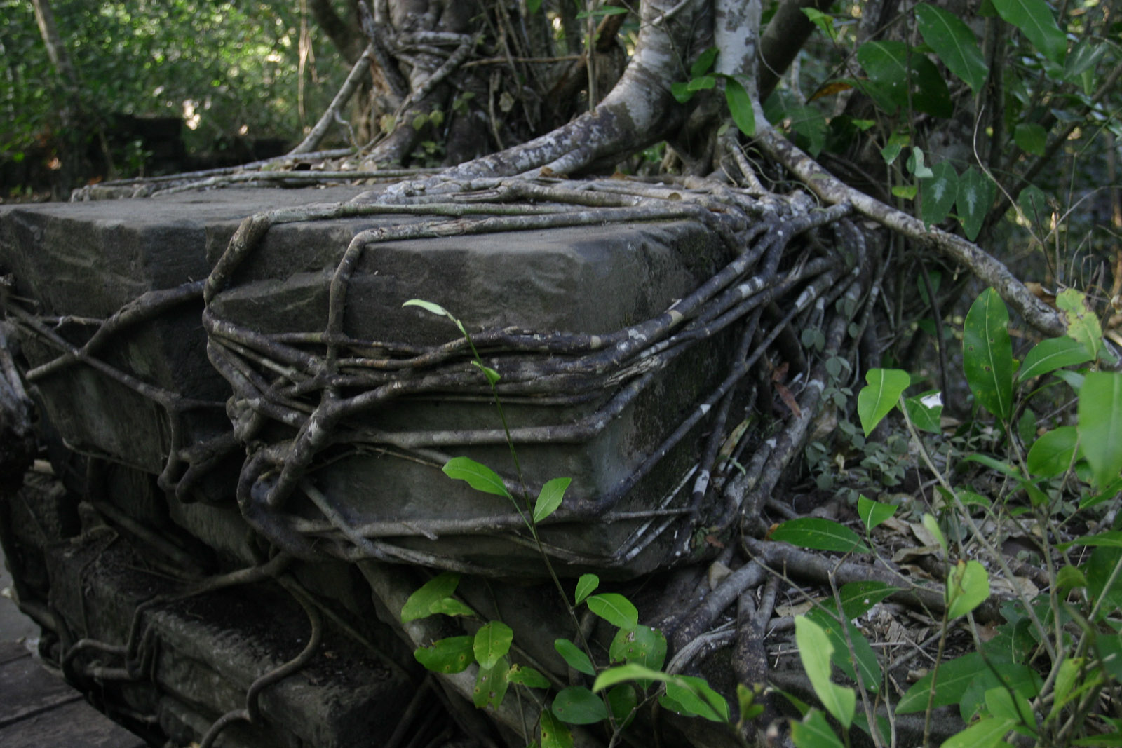 Image result for tree roots in stone