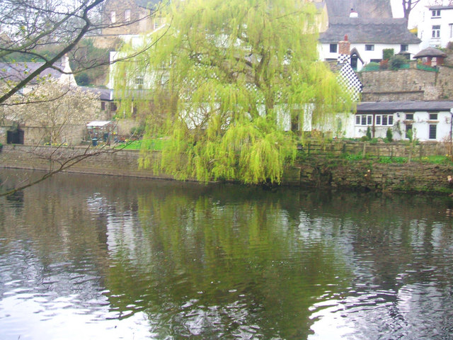 Willow on the River Bank, Knaresborough - geograph.org.uk - 1258349