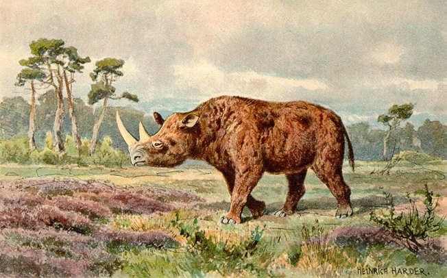 Le rhinocéros laineux (Coelodonta antiquitatis)