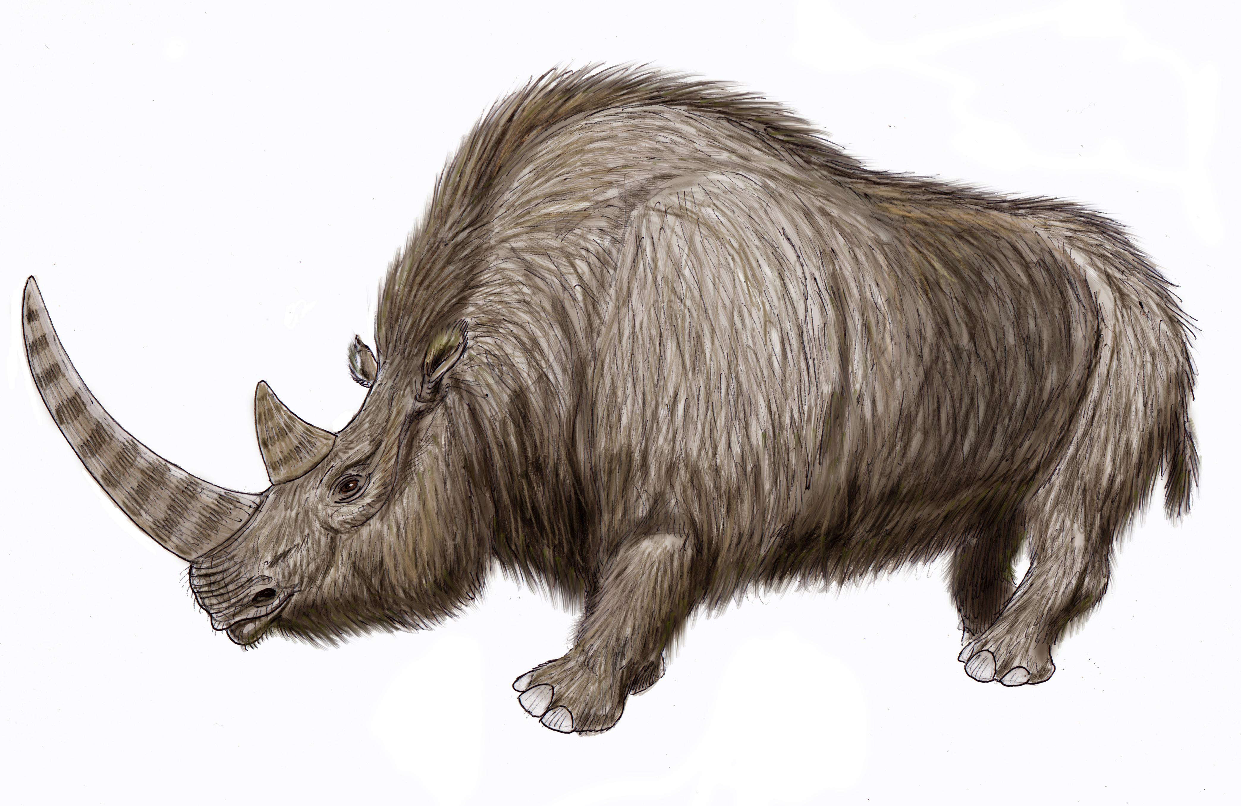 rinoceronte lanudo extinto