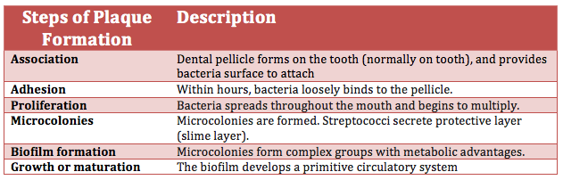 Dental Plaque Wikipedia