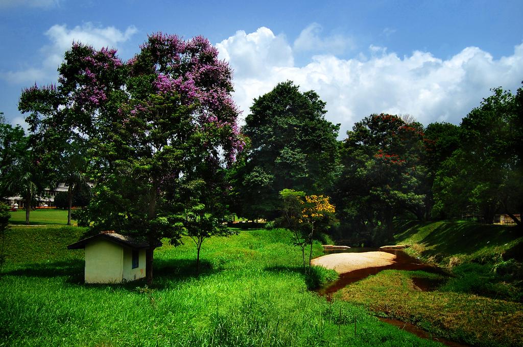House Landscaping Pictures Sri Lanka : File a landscape in peradeniya sri lanka g