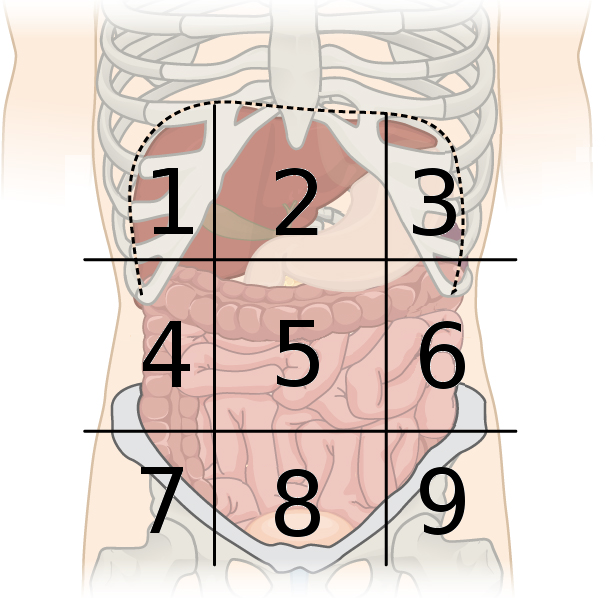 File:Abdominal Regions Cleaned labeled.png - Wikimedia Commons | 606 x 598 png 283kB