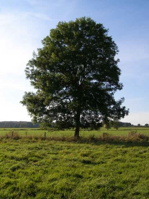 Sole Tree in Field