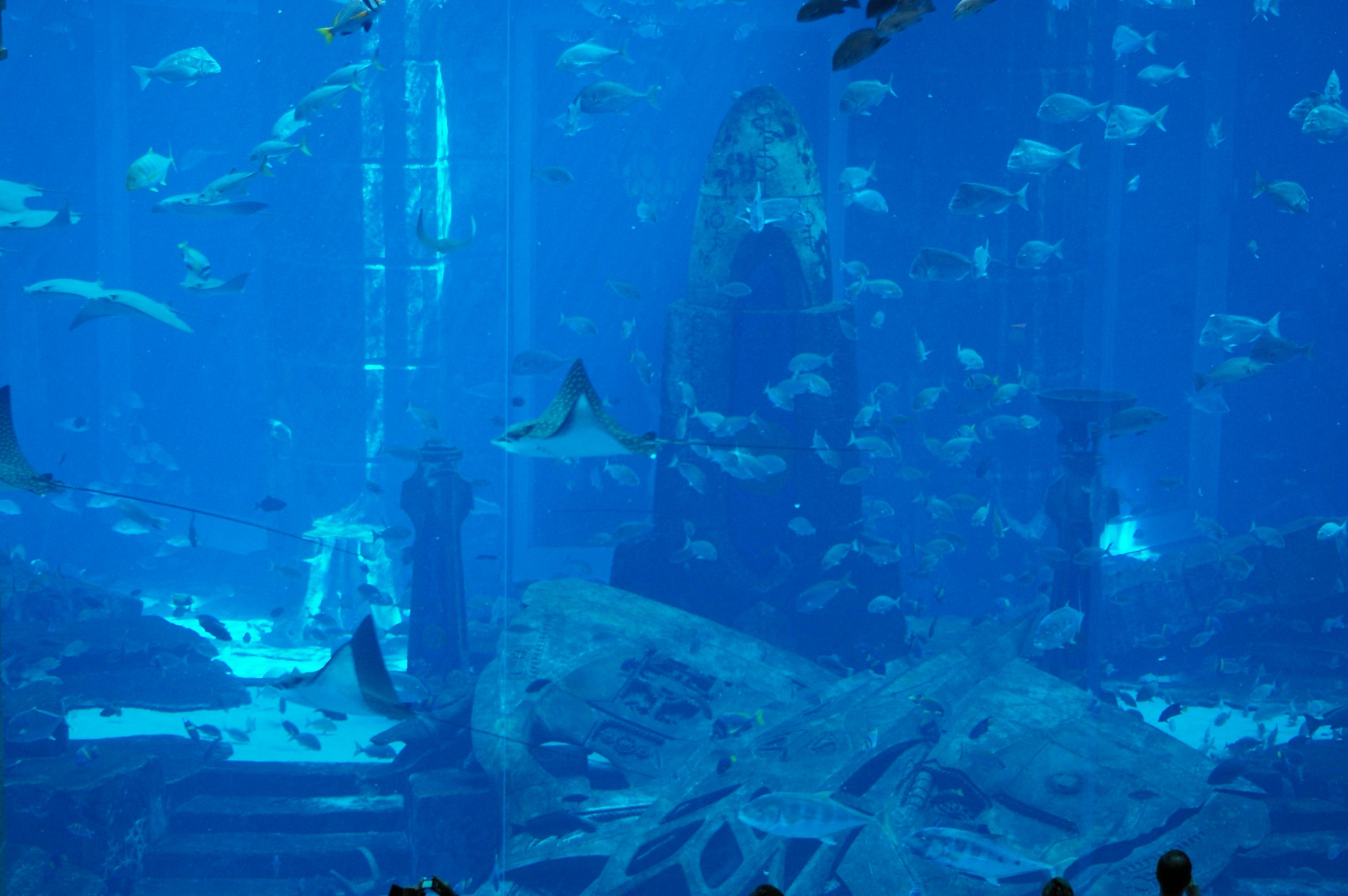 Image Result For Pictures Of Aquarium
