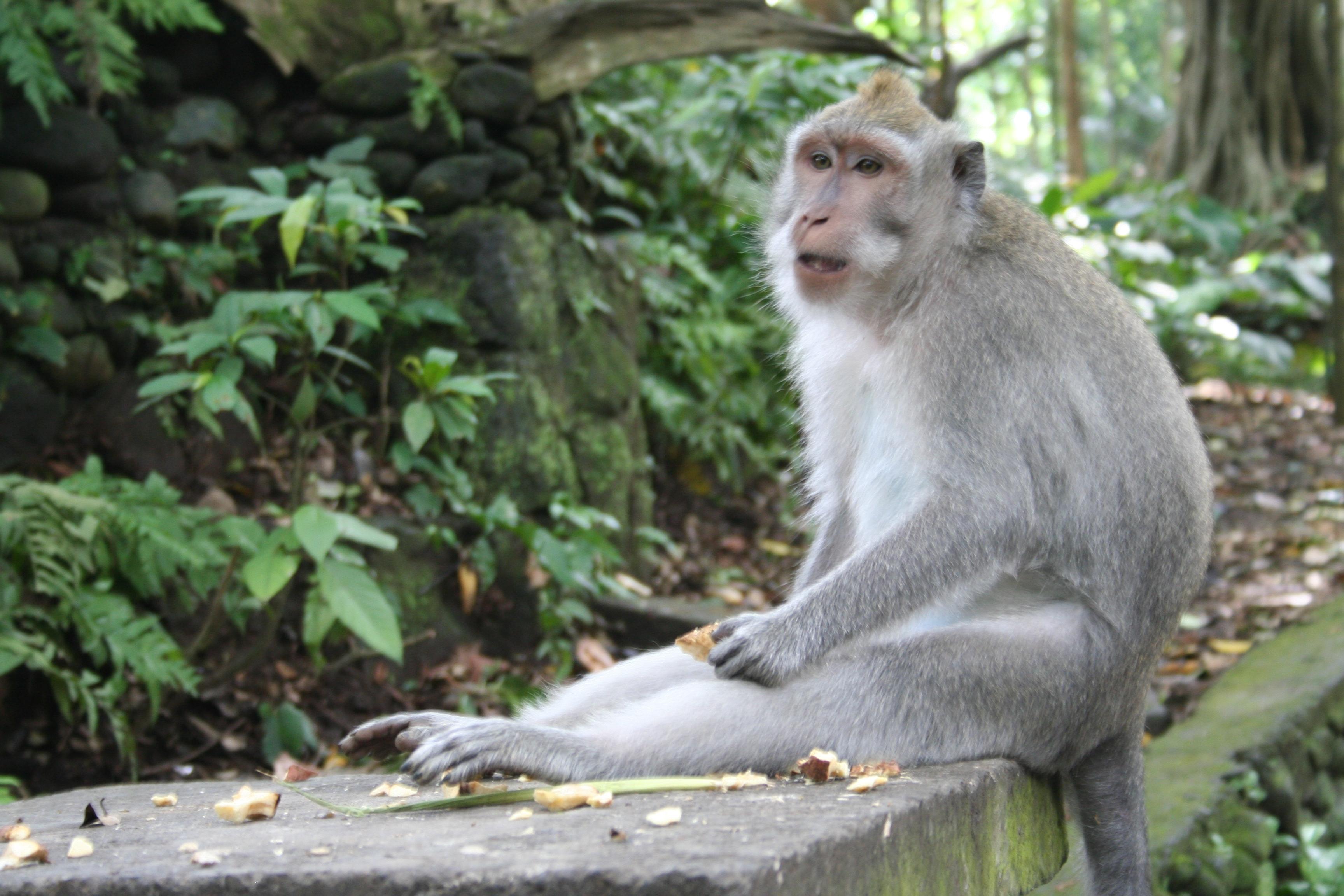 Image result for Monkey Forest