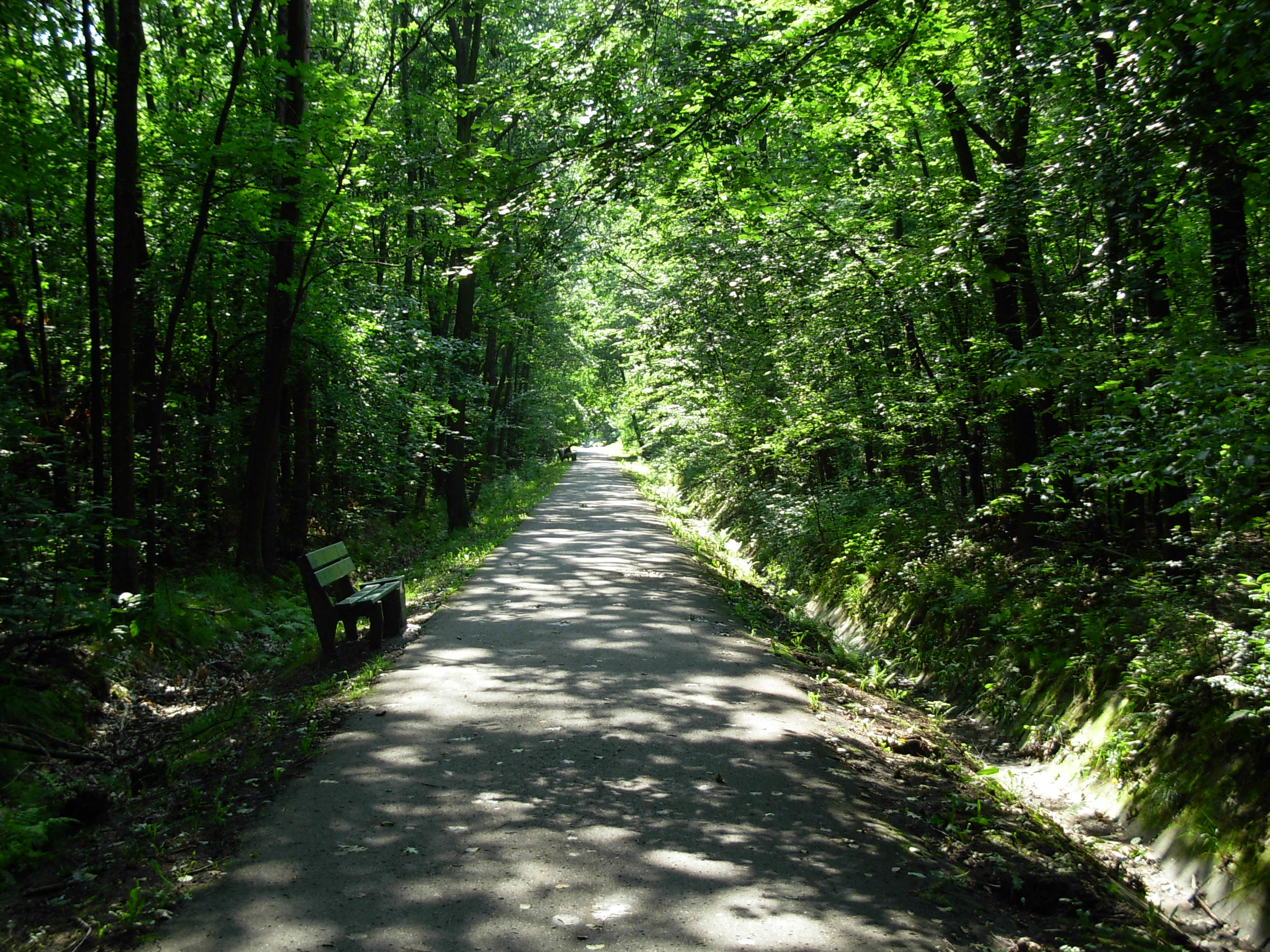 File Bryn 243 W Road Into The Forest Jpg Wikimedia Commons
