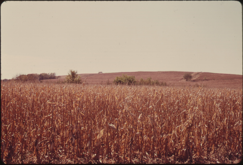 Is Fertile Soil A Natural Resource