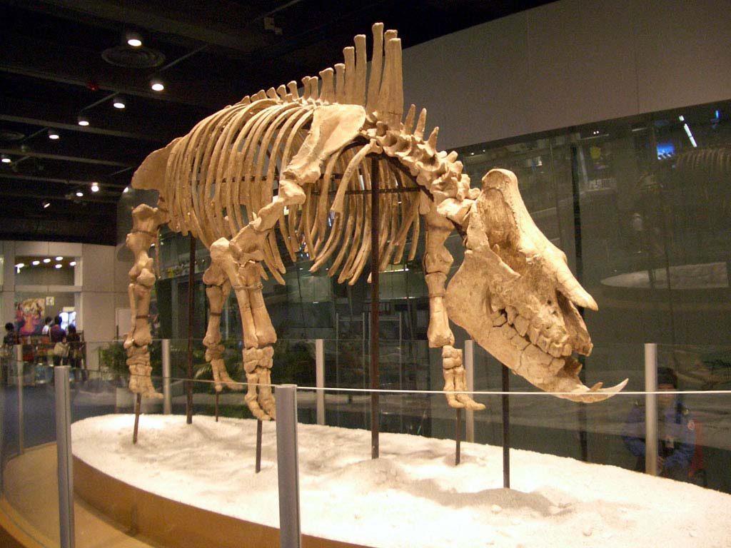 Chilotherium - Wikiped...