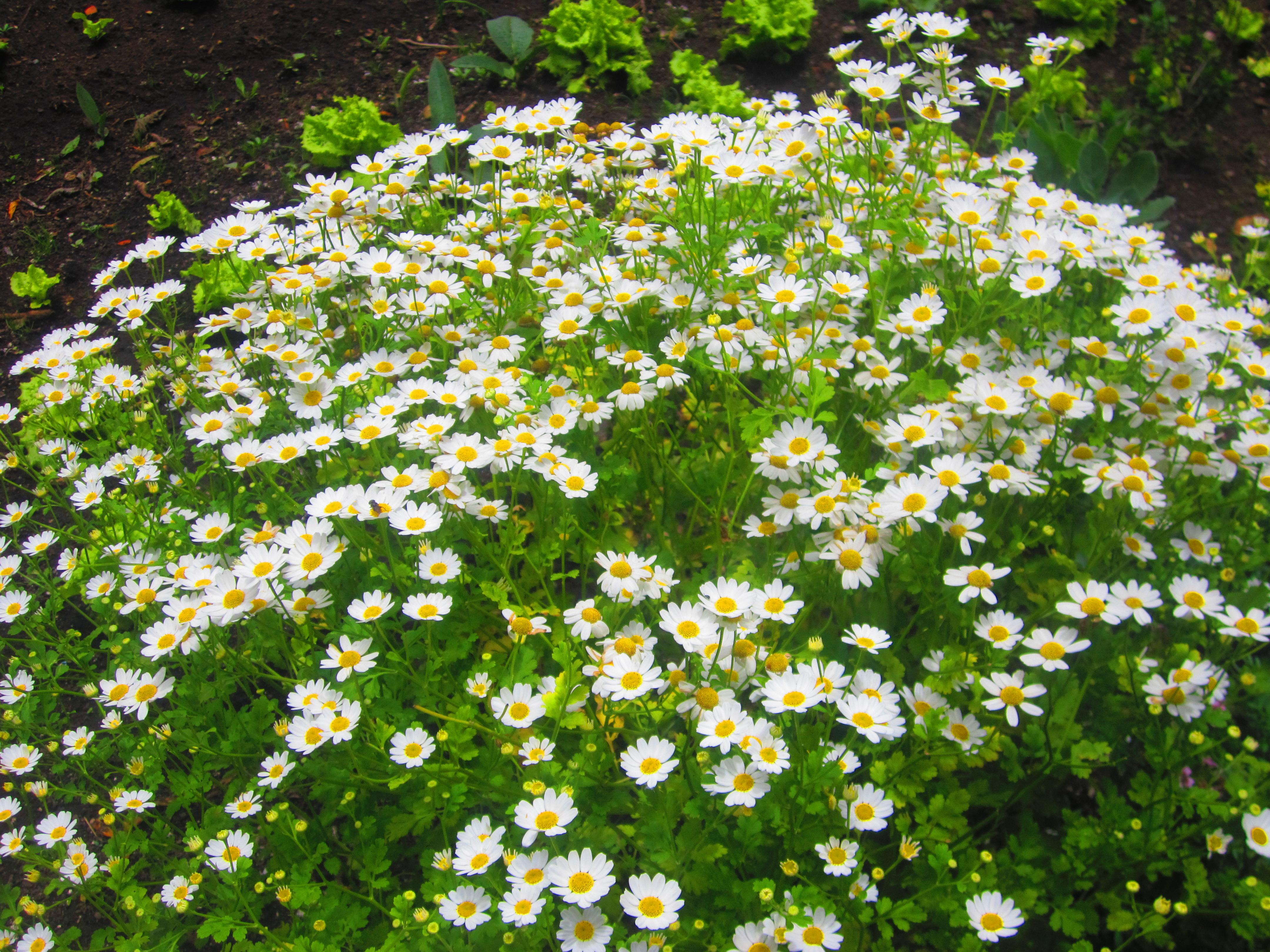 Jardin de flores gallery for Casa jardin