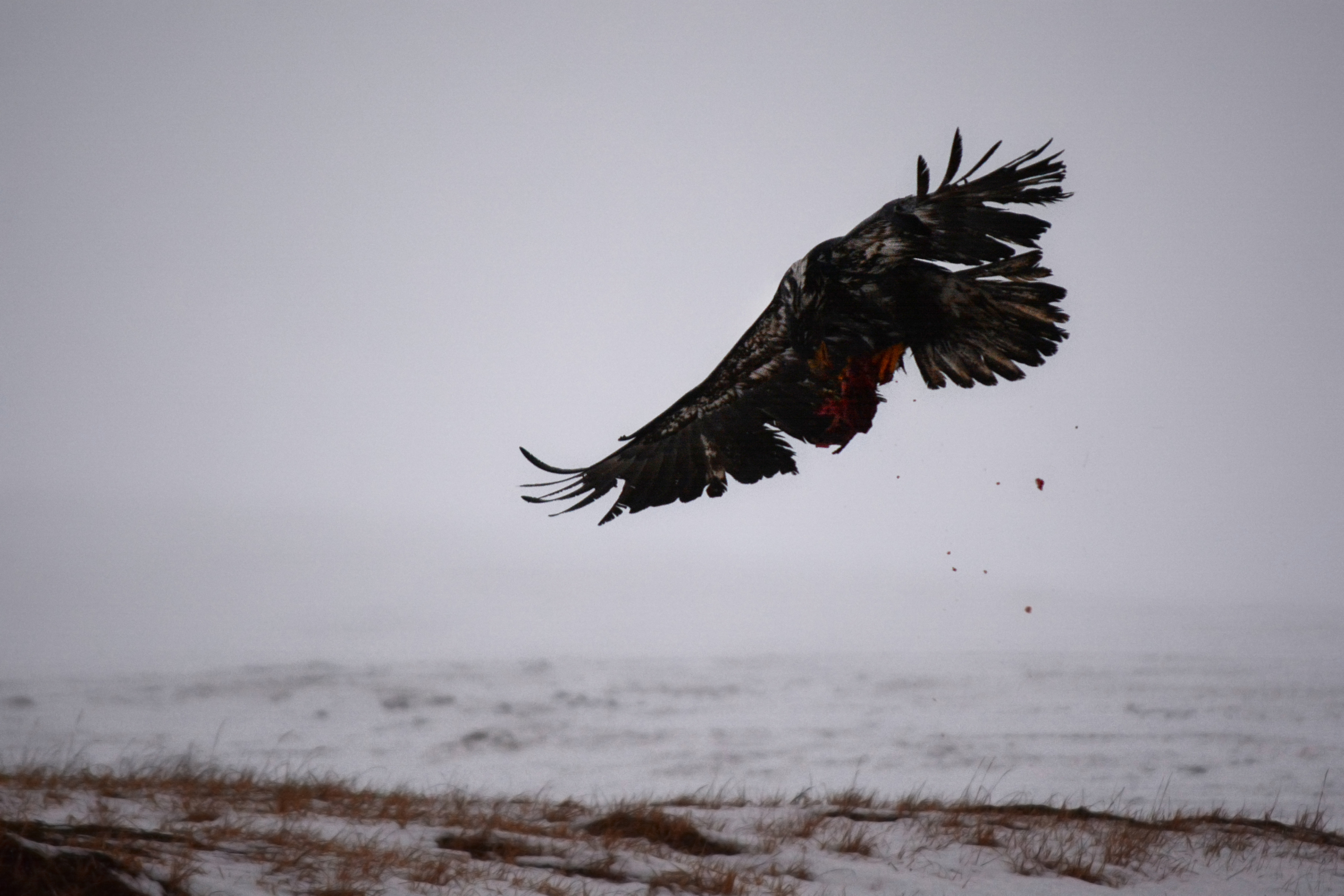 Hunting Eagle Island Nj Delaware River