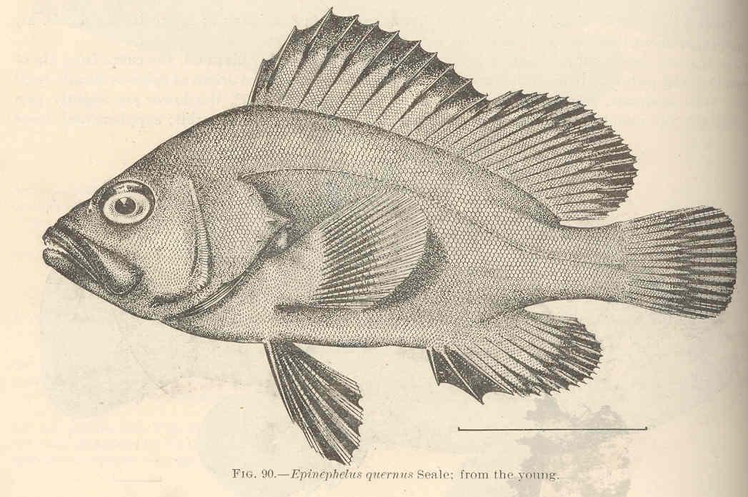 Eightbar grouper dating