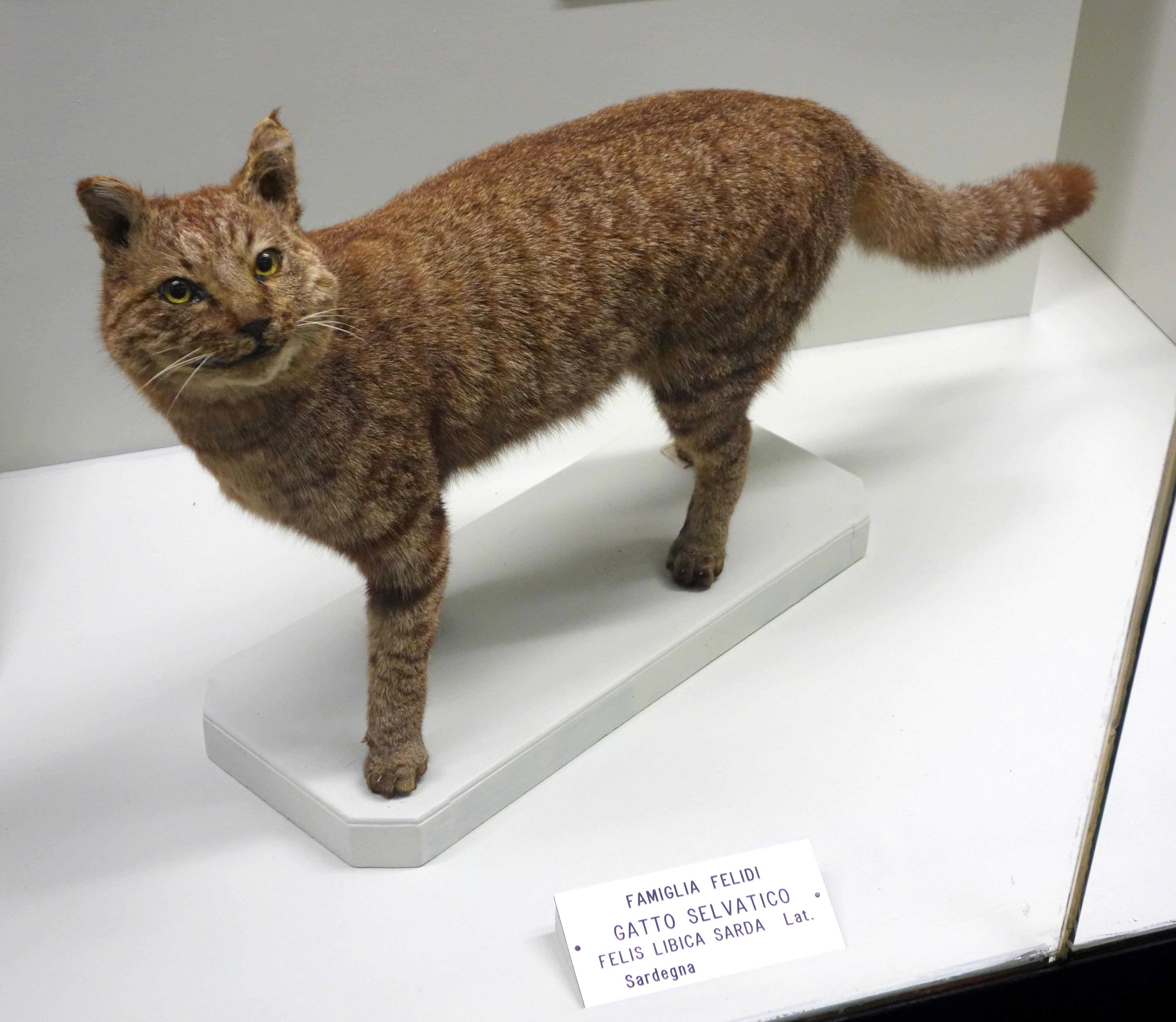 A Natural Cat Hair Mat