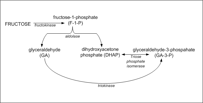 Fructolysis - Wikiwand