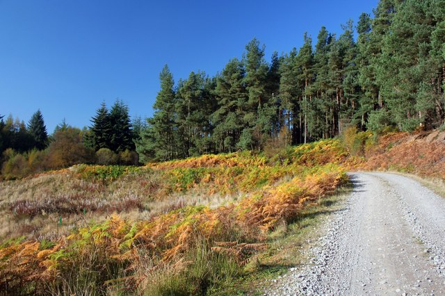 Hamsterley Forest - geograph.org.uk - 590397