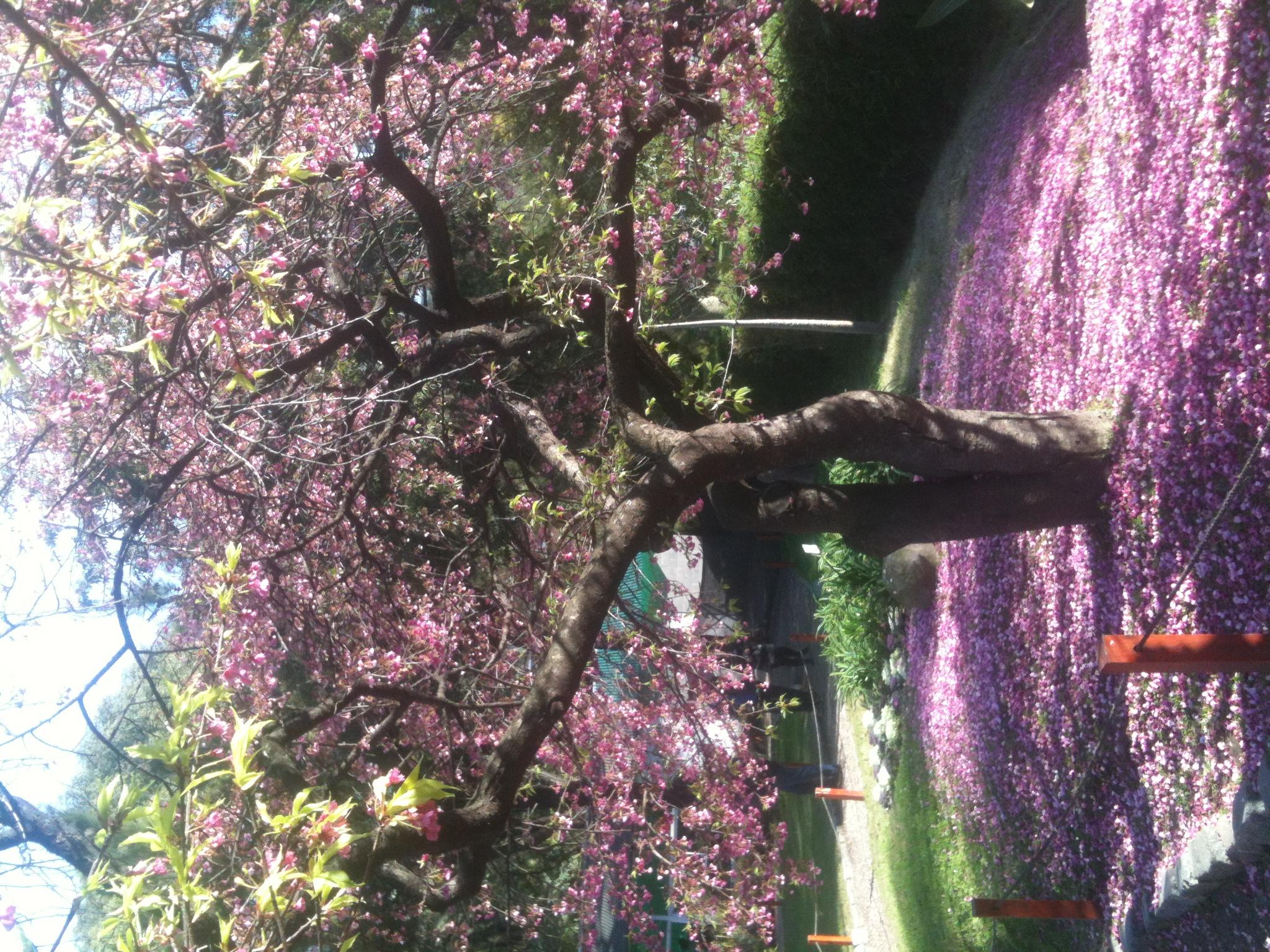 file jardin japones arbol jpg wikimedia commons