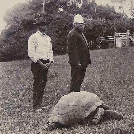 Jonathan tortoise wikipedia publicscrutiny Gallery