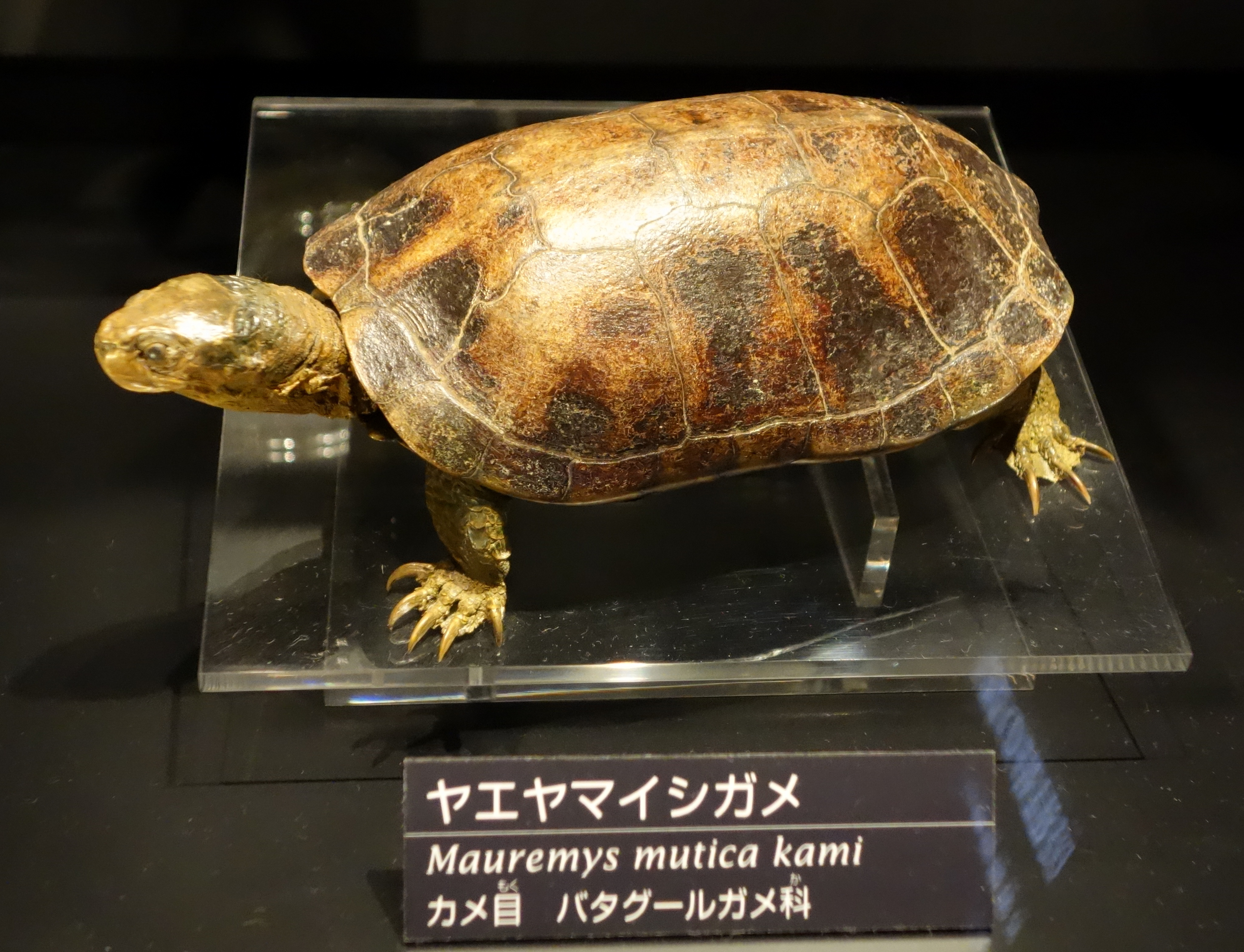 National Museum of Nature And Science Tokyo National Museum of Nature