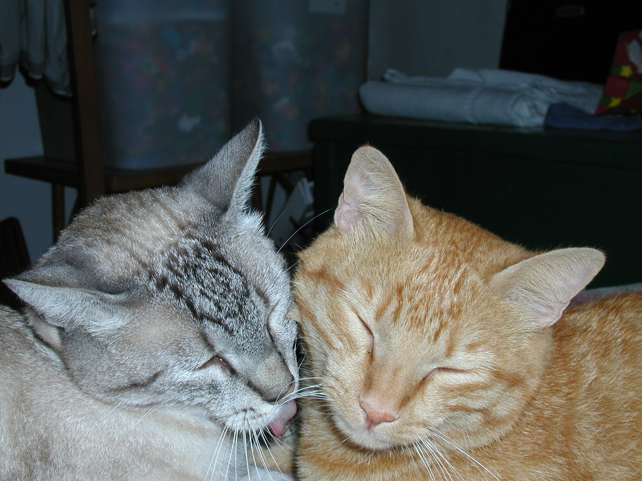 Two cats with heads close together. One is sleeping and the other is licking the sleeping cat.