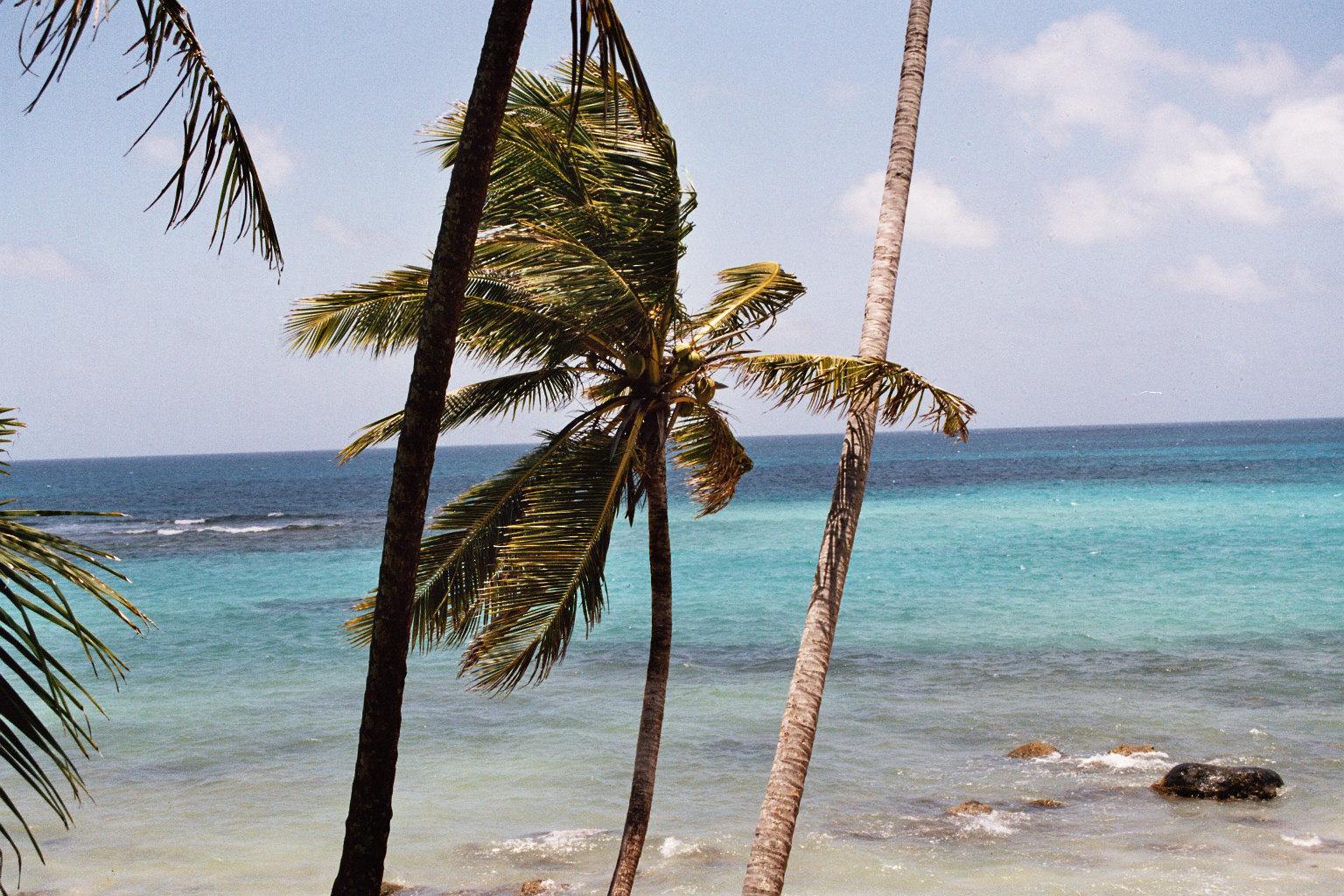 Palmen auf Corn Island, Quelle: WikiComons, Foto by Tabea Huth, Tabea_Huth*at*web.de