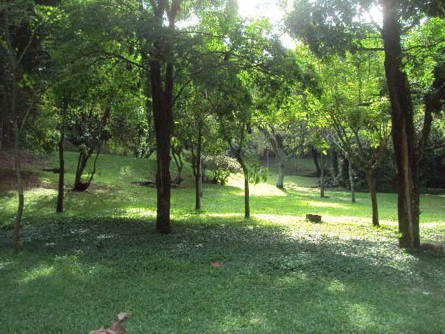 Fotos do parque do ibirapuera 3