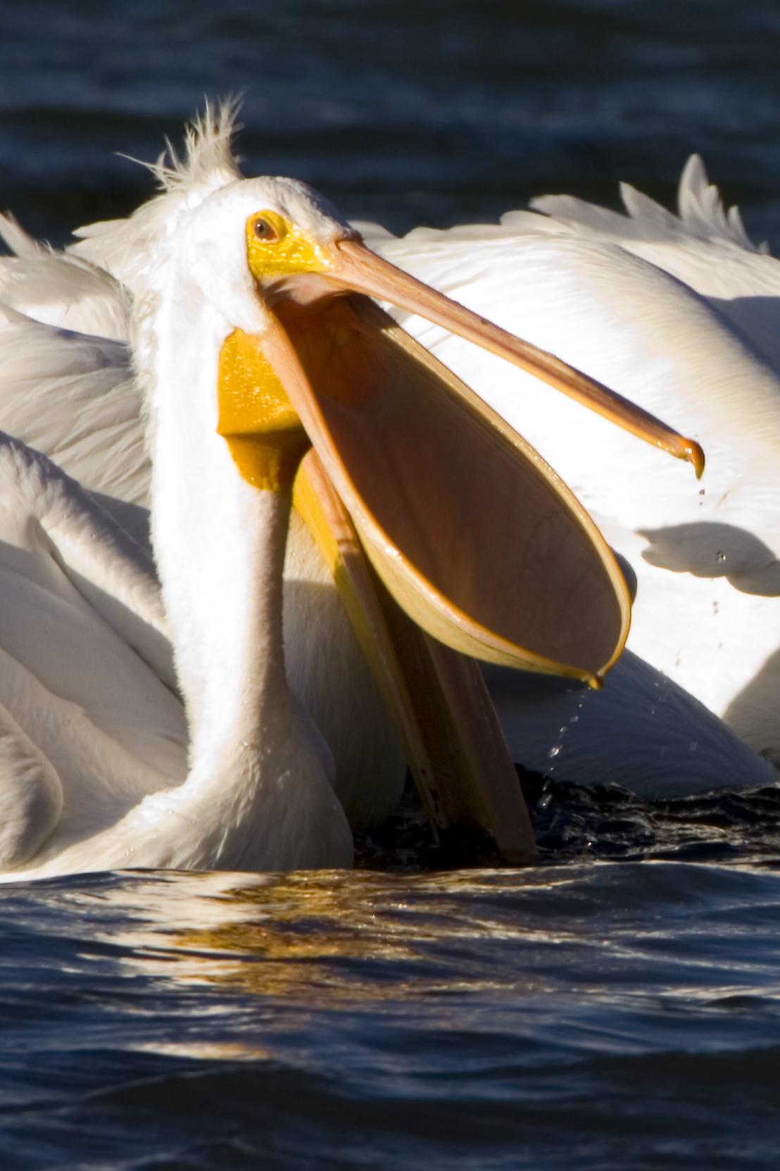 Pelican Bay North Beach Marker  Naples Fl