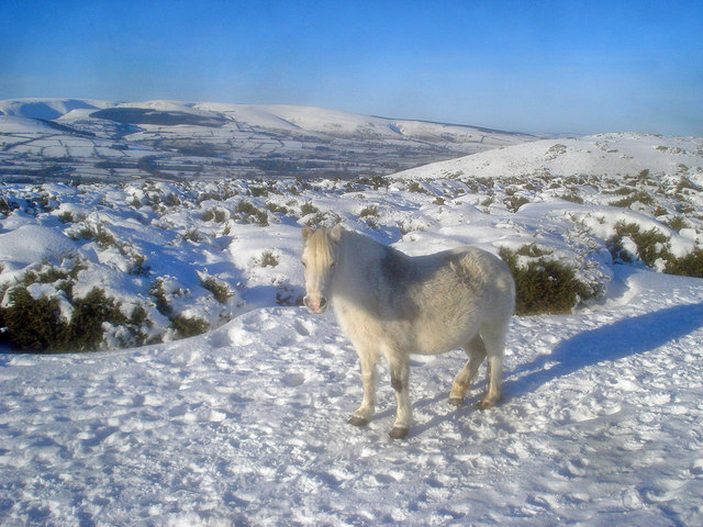 Pony on Hergest Ridge - geograph.org.uk - 1725487