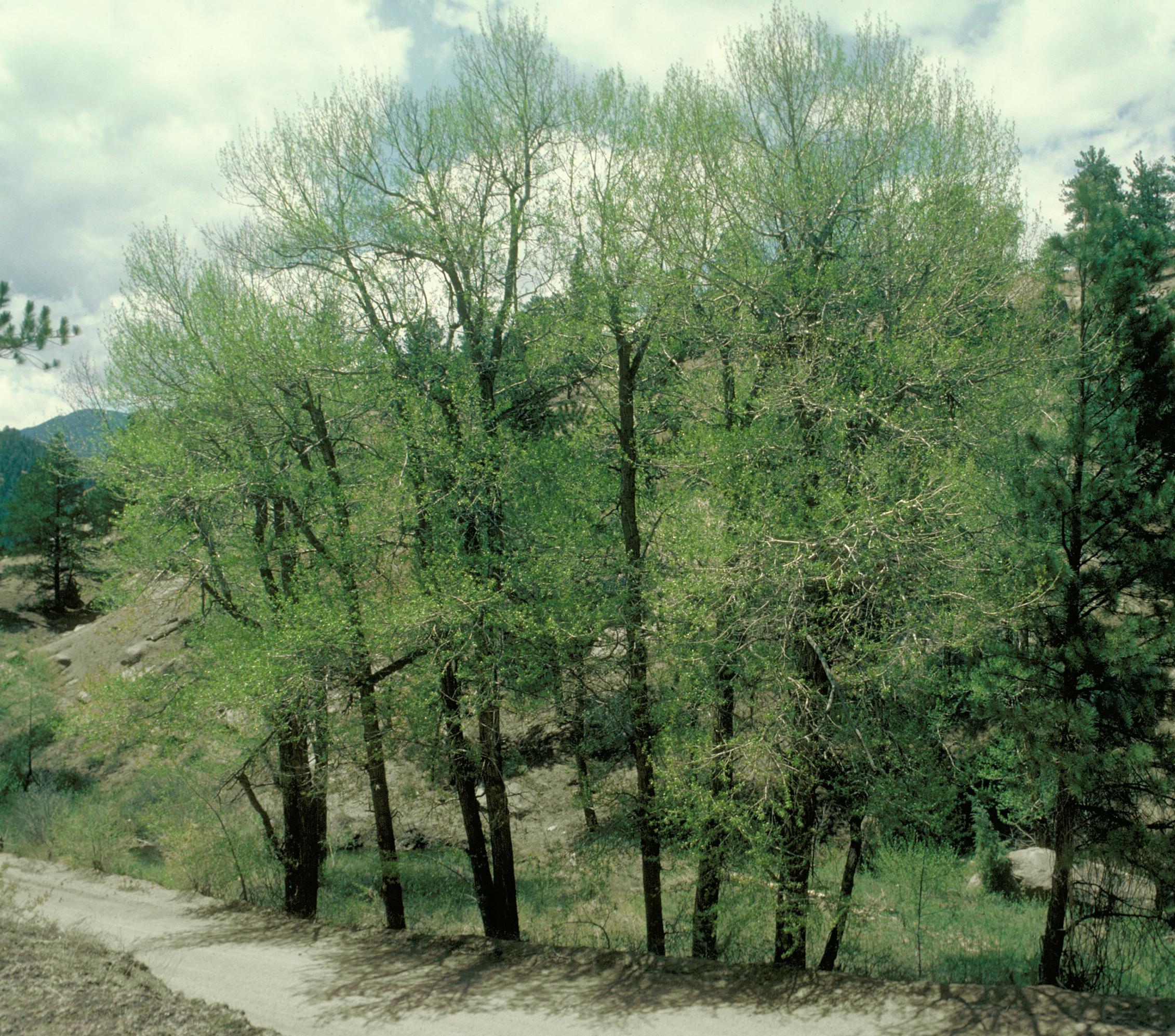 The Natural Way Tree Service