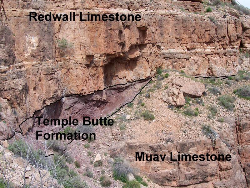 Muav Limestone Wikipedia