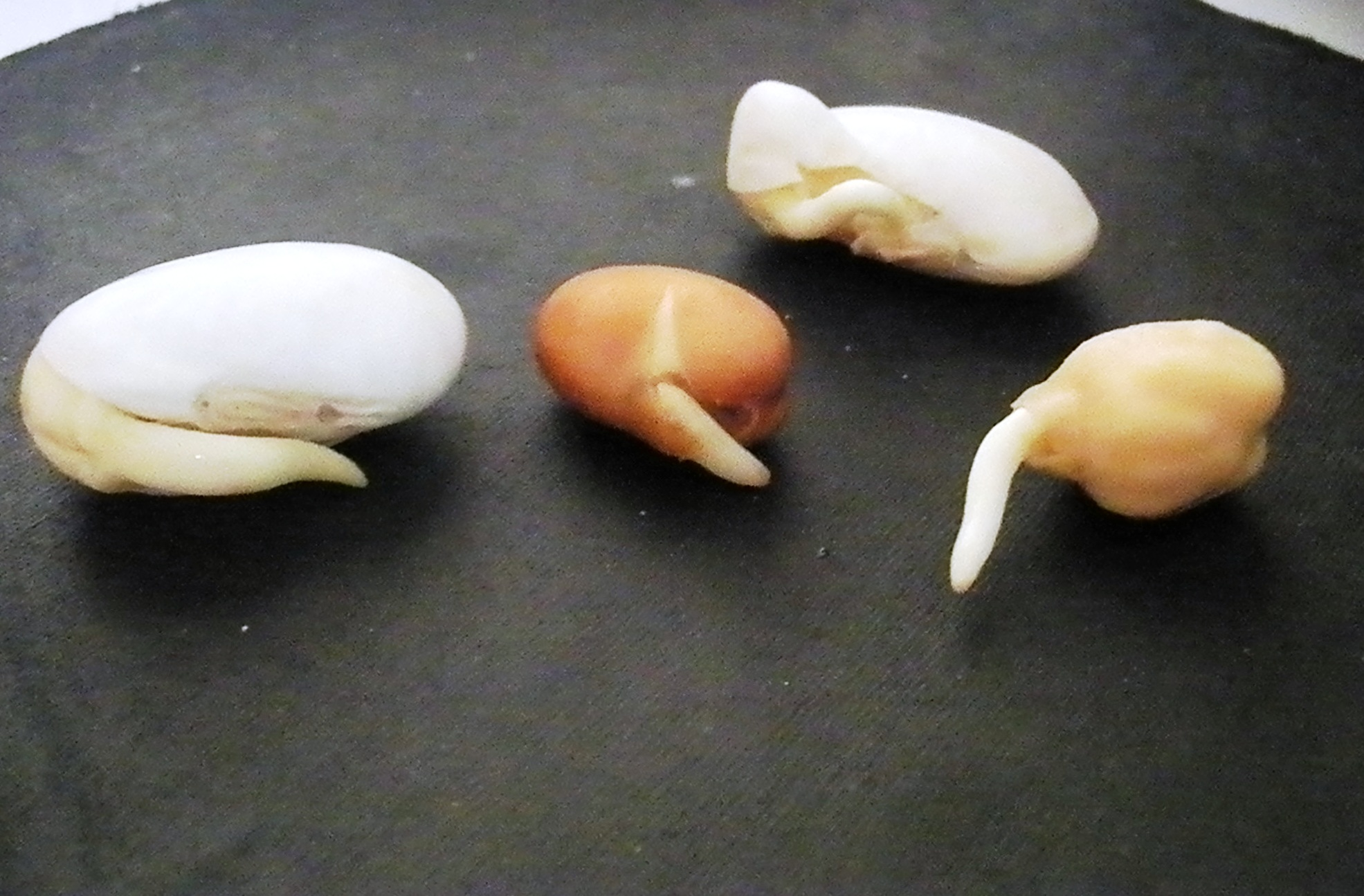 Image result for sprouted grains process