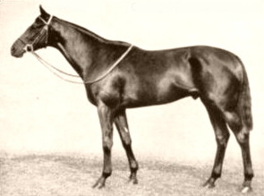Sickle (horse) British-bred Thoroughbred racehorse