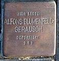 StolpersteinMagdeburgBlumenfeldGerauschAlfons.jpg