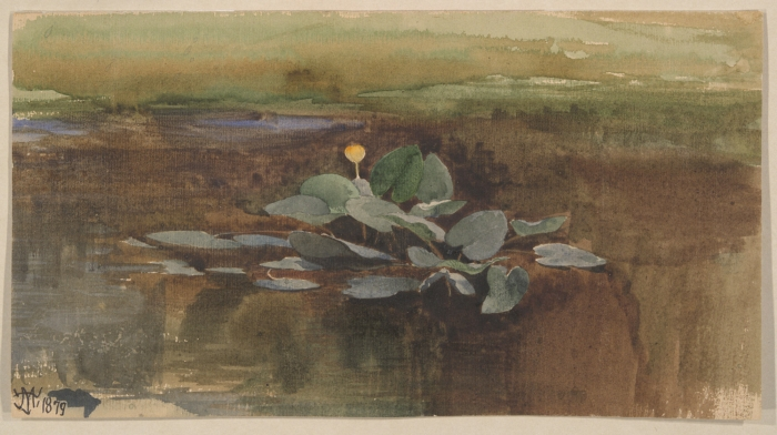 Study of a Water Lotus