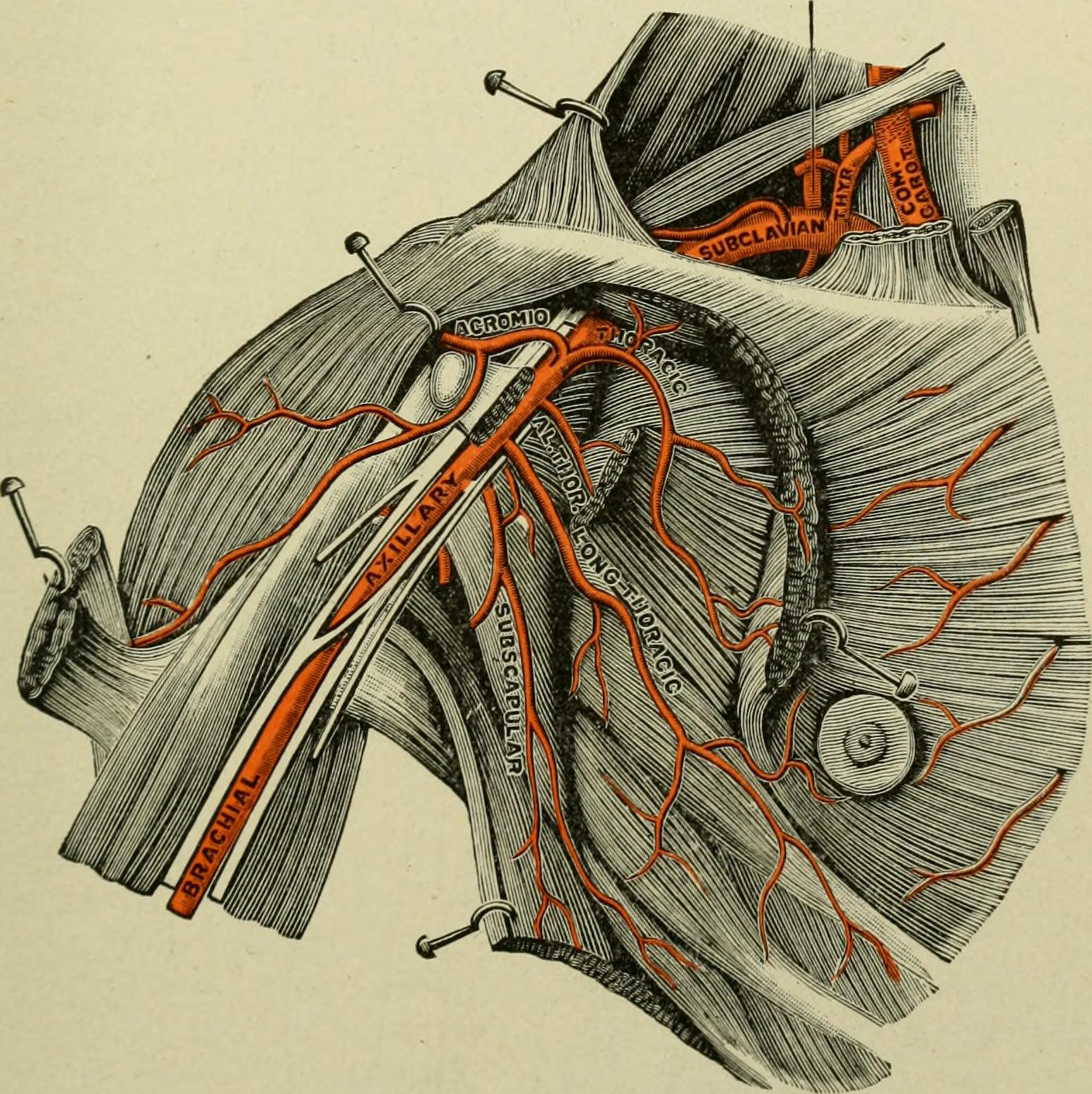 File:Text-book of anatomy and physiology for nurses (1913 ...