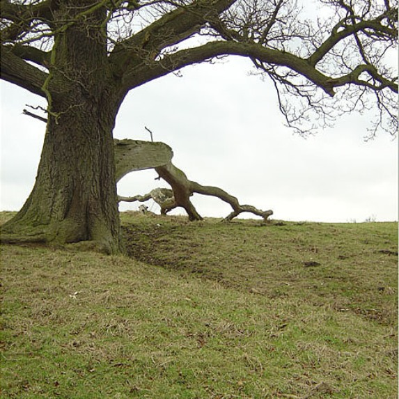 File:Tree with fallen branch - geograph.org.uk - 646563 ...