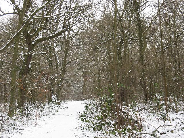 Winter in Elmstead Woods (6) - geograph.org.uk - 1655689