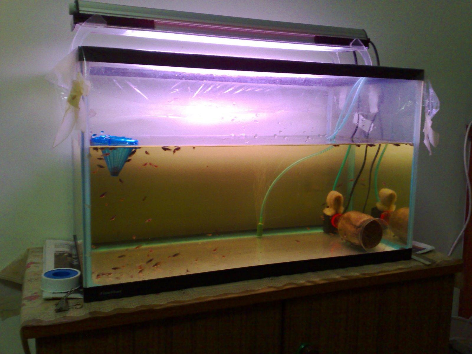 Betta aquarium joy studio design gallery best design for Betta fish tank