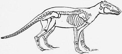 File:1911 Britannica - Anoplotherium commune png - Wikimedia