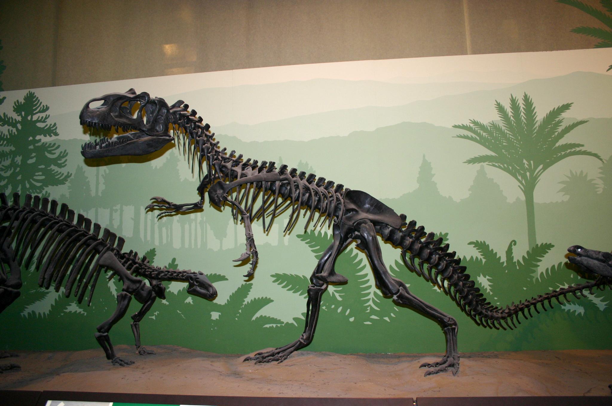 Museum Of Natural History Milan Italy