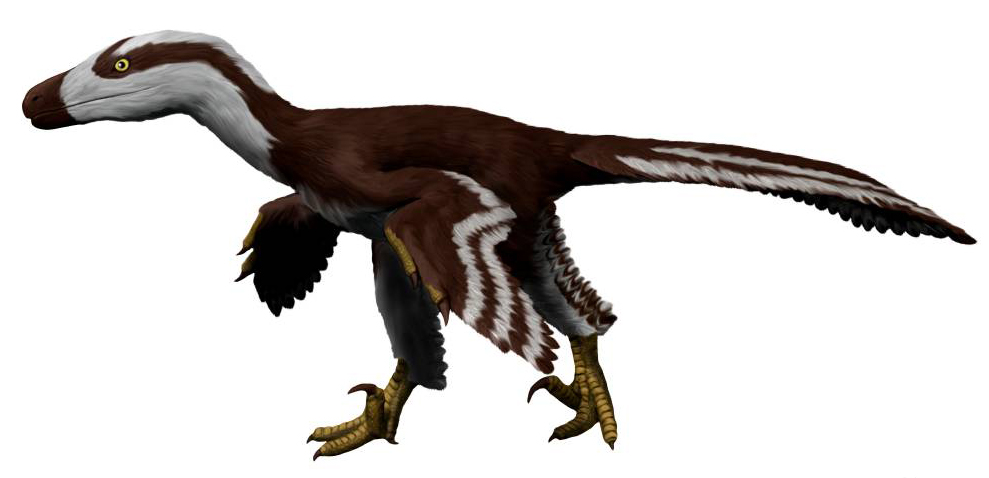 https://upload.wikimedia.org/wikipedia/commons/e/ec/Acheroraptor_NT_small.jpg