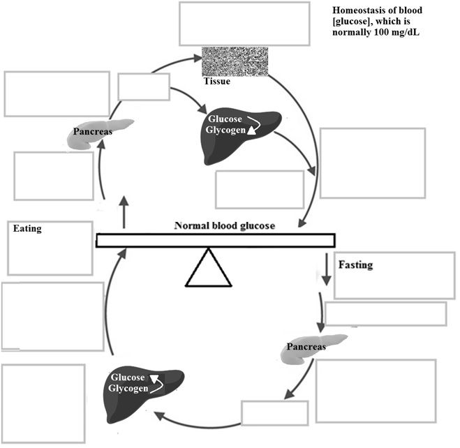 Blood Glucose Chart: Actions of insulin vs. glucagon.jpg - Wikimedia Commons,Chart