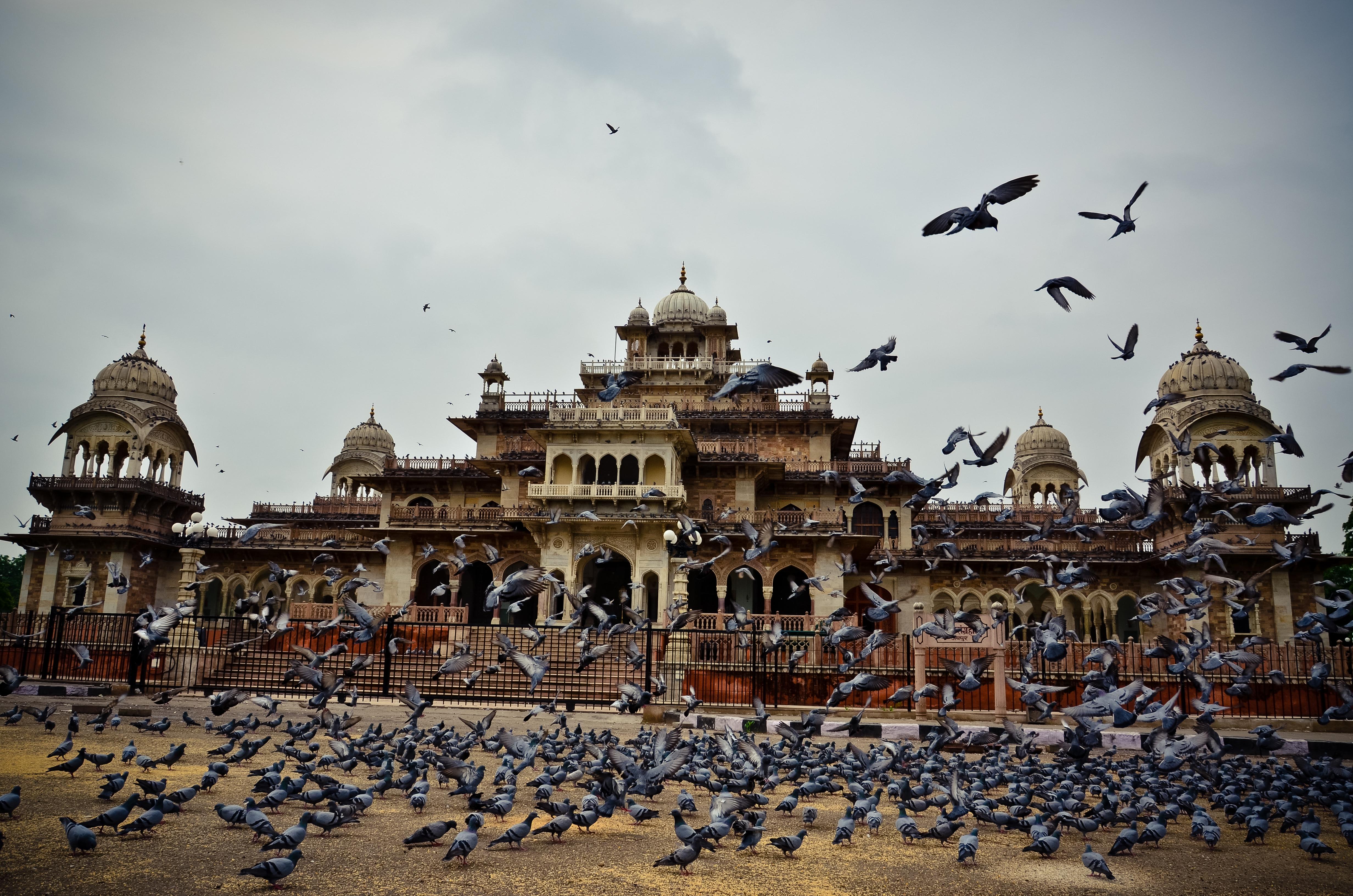File Albert Hall Jaipur Jpg Wikimedia Commons